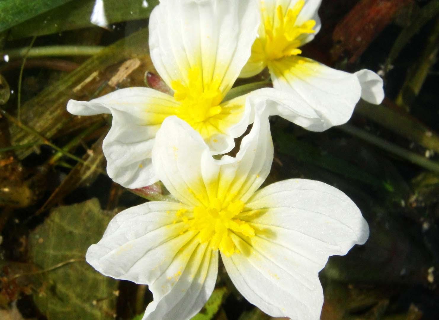 湖南水生植物,湖南水生植物形状什么样的