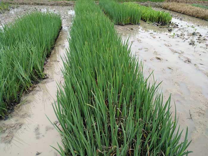 广东水生植物,广东水生植物能带来什么好处呢