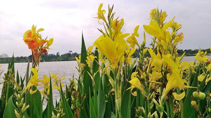 中山水生植物,中山水生植物具体扩展速度
